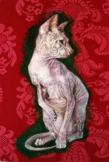 Gato sin abrigo