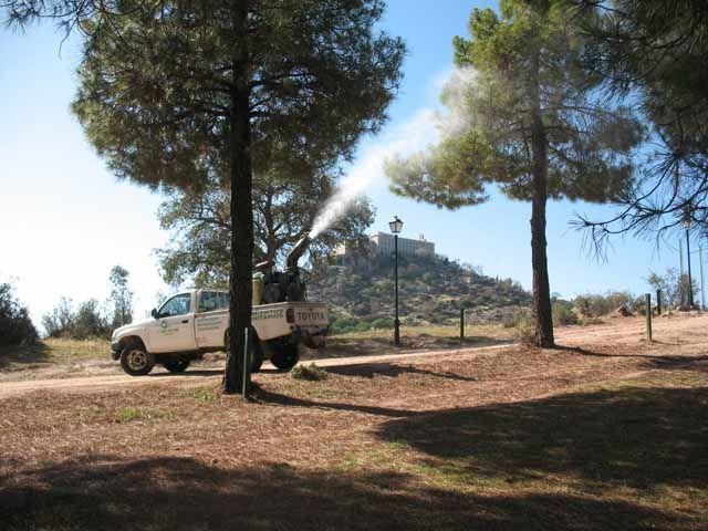 La Junta realiza tratamientos fitosanitarios contra la procesionaria del pino en el Parque Natural Sierra de Andújar