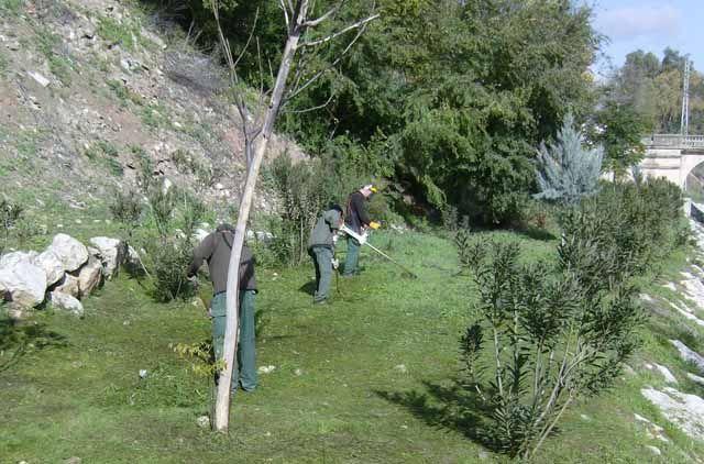 Trabajos de forestación en la Estación Linares-Baeza