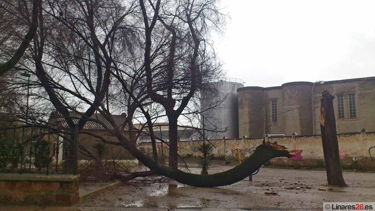 El temporal provoca múltiples incidencias en Linares