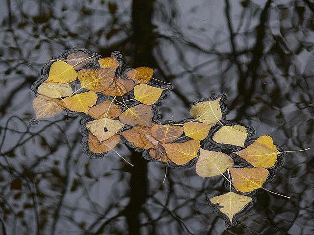 El brillo de las hojas del álamo
