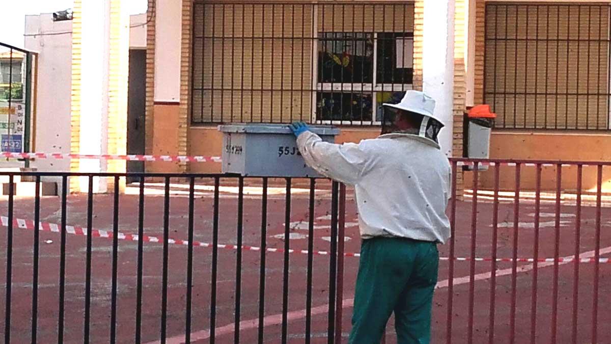 Un enjambre de abejas cierra el colegio Padre Poveda