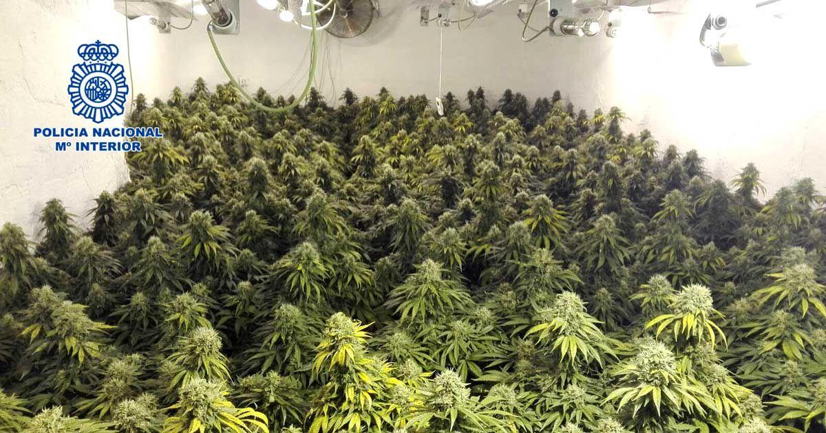 La Policía Nacional desmantela un invernadero dedicado al cultivo de marihuana oculto en una vivienda