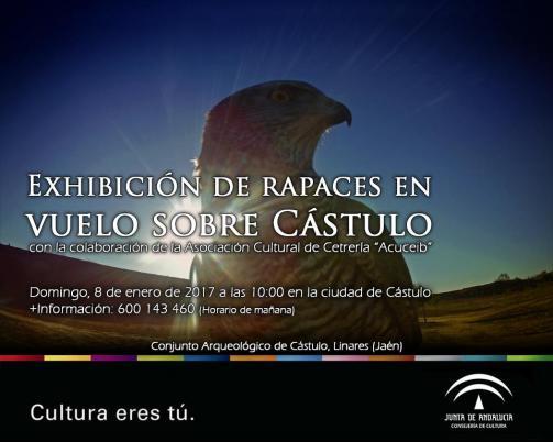 castulo_cetreria