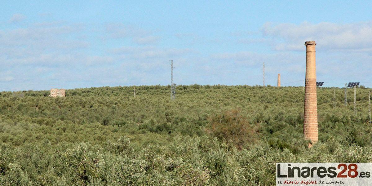 COAG valora positivamente la reunión con el ministro que se ha comprometido a liderar las medidas acordadas con el conjunto del sector del olivar