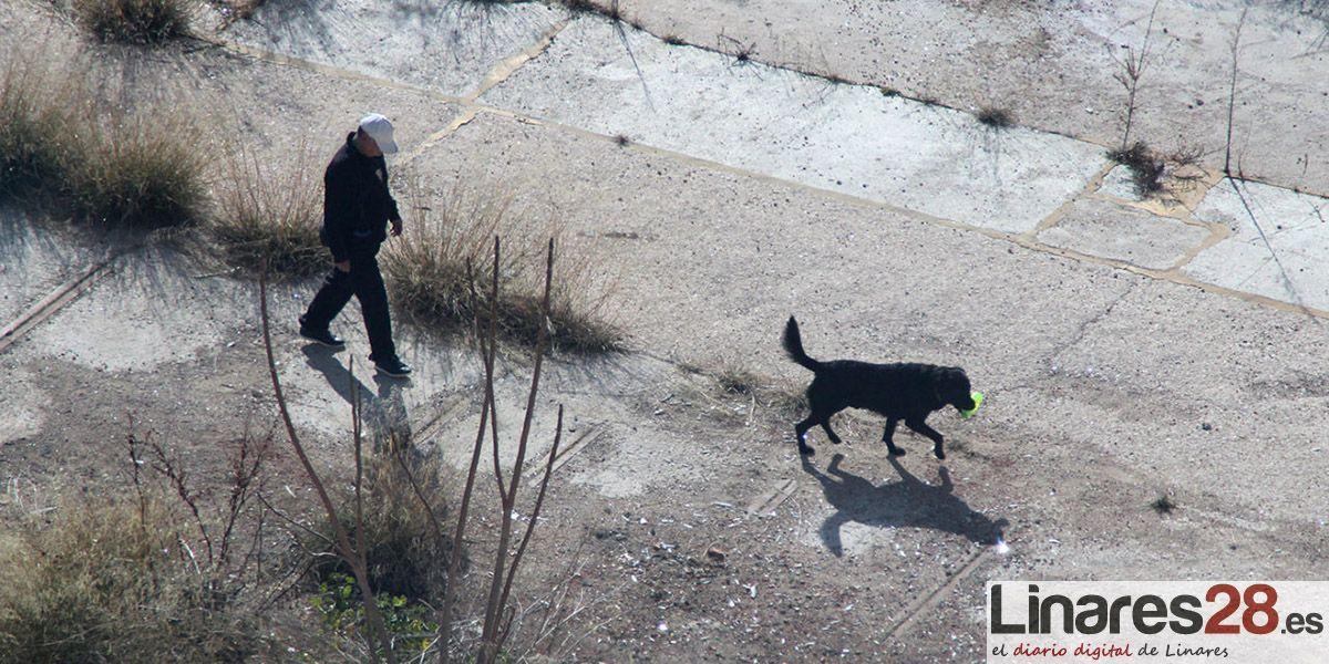"""Policía Local vigilará para evitar que los perros """"anden sueltos"""""""