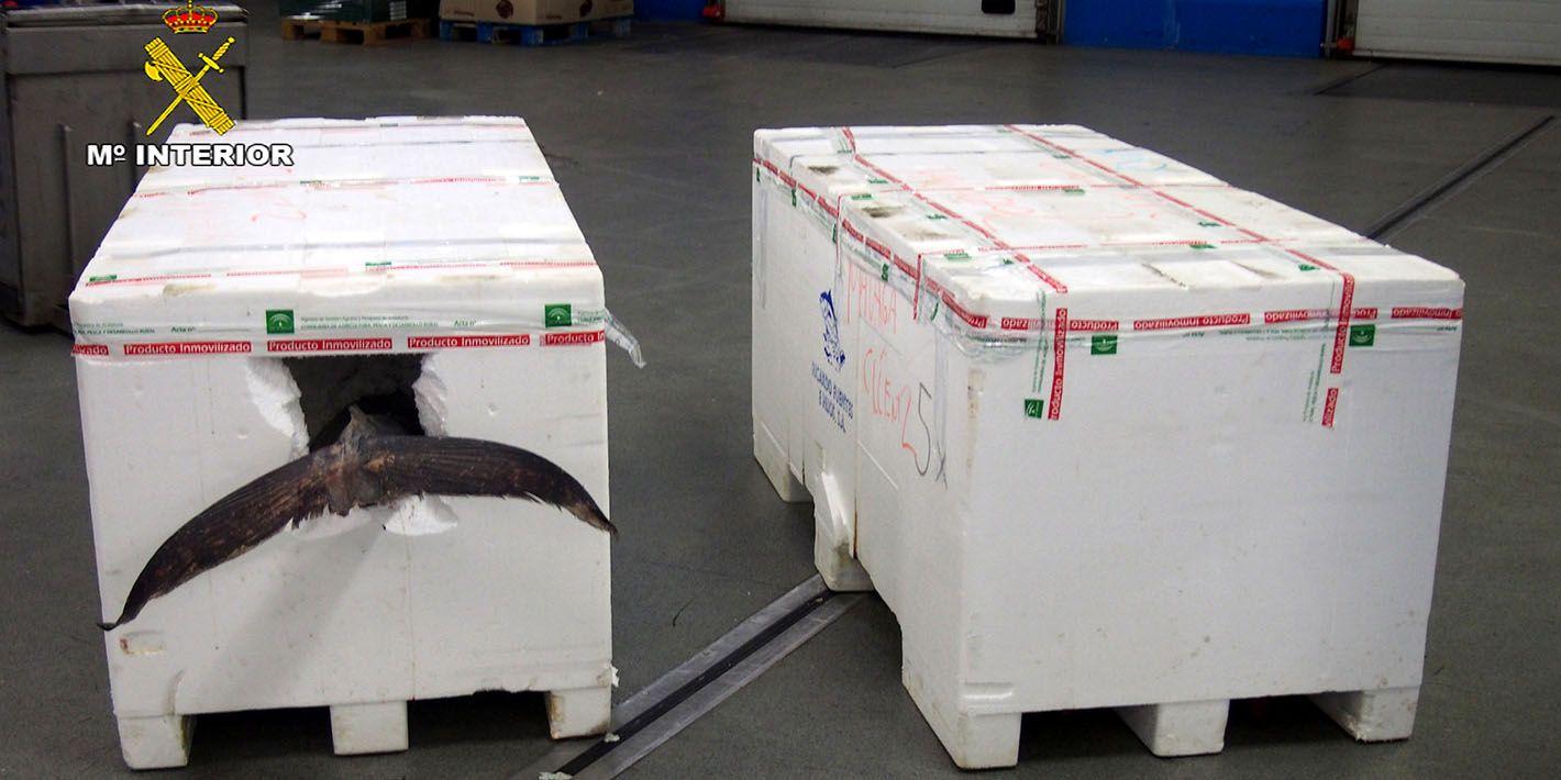 El SEPRONA de Linares interviene 440 kilogramos de Atún Rojo en el Polígono Guadiel
