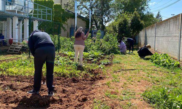 Pacientes de Salud Mental del Hospital de Linares cultivan un huerto ecológico