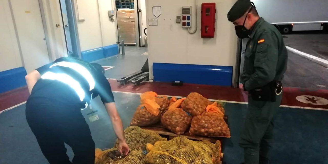 SUCESOS | Intervienen 588 kilogramos de pescado y marisco no apto para el Consumo