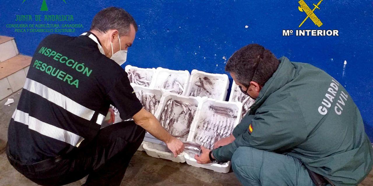 SUCESOS | La Guardia Civil interviene 24 kilogramos de pescado en el Polígono Guadiel