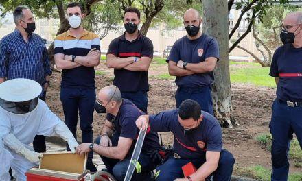 VÍDEO | Linares instala ocho dispositivos para proteger y controlar los enjambres de abejas